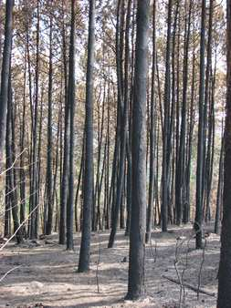 Noticia forestal